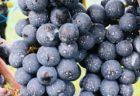【マツコの知らない世界】で注目⁈サドヤの日本一長熟ワインとは?