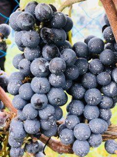 ワイン初心者が絶対注文で困らない6つのポイントとは⁈