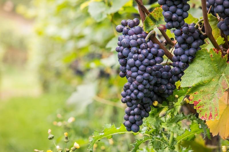 赤ワイン初心者飲みやすい赤ワインおすすめ「ピノ・ノワール」