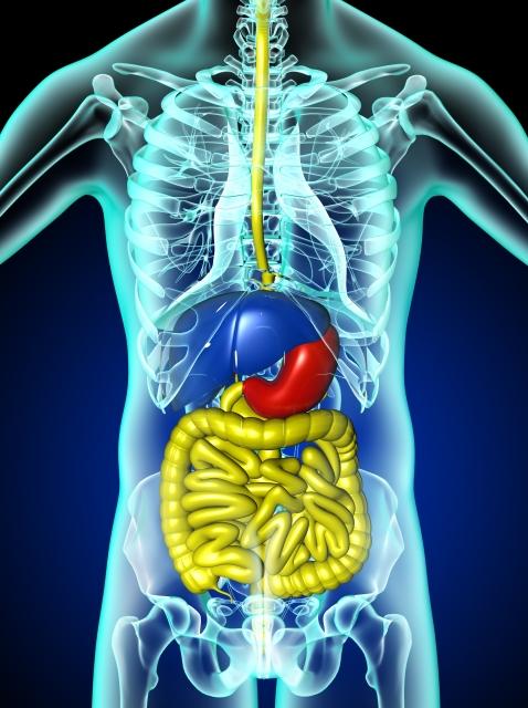 飲酒で日本人が癌になりやすい臓器・器官とは?